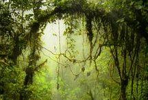 Tropical Rainforest / Tropical Rainforest
