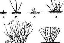 обрезка деревьев,кустарников