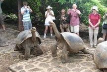 Ecuador & the Galapagos Islands / Ecuador boasts a pleasant climate and four distinct geographical regions that offer a diverse range of attractions - Amazon Rainforest, Pacific Coast, the Andes and, last but not least, the incredible Galapagos Islands.  let us take you there! - http://www.world-discovery.co.uk/destinations/ecuador-galapagos-holidays_82.htm