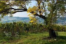 Bor_Wine