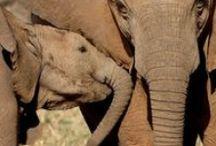 Botswana Safari Holidays / Botswana is Africa at its untamed best - abundant wildlife, pristine wilderness, low tourist volumes and luxury accommodation.  http://www.world-discovery.co.uk/destinations/botswana-safari-holidays_24.htm