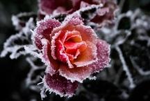 Frozen Beauty / by Delisa Gutermuth