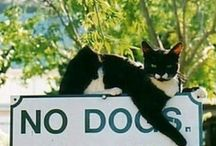 Photography: Cats and Dogs! / by LUCY COLEMAN