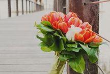 Tulips / My favourite #flower