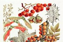 Illustration: Plants, Flowers, Fruits, Vegetables, Fungi and Trees. / by LUCY COLEMAN