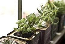 Pousse, petite plante!