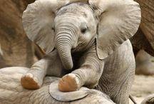 God's Elephants