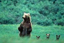 Mama Bear / Unconditional love