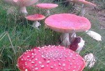 God's Mushrooms