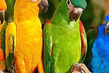 God's Birds