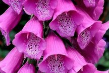 Pink Flowers for Breast Cancer / In honour of woman with breast cancer