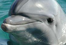 God's Dolphins