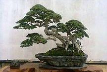 mooie bonsai's-1 / by verheyen maria