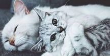 Pets ♥