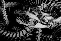 """Black&White ▪ / Beauté féminité complexité corps peur mort étrange simplicité abstraction... Tous, permet de trouver l'inspiration. Recherches menés principalement en 2014-2015 pour le développement d'un projet """"Anatomia-Psychologia""""."""