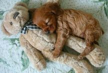Puppies / Puppy, animal, sweet, friends