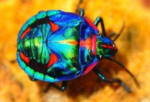 Gods Weird Insects