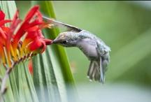Gardening Tips & Wisdom