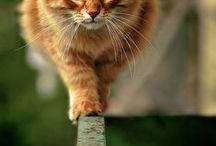 Felines Defy Physics