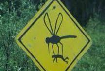 Tis' a Sign...