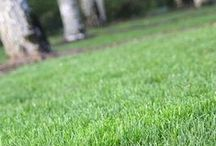 Lawn Care / by Oregon State University Extension Service