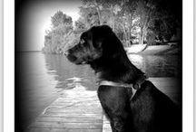 Dog / Cães :D