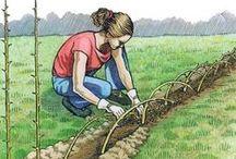 Jardinagem e Gardens