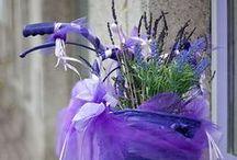 Lavande e Provence