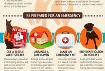 Pet Safety & Disaster Preparedness
