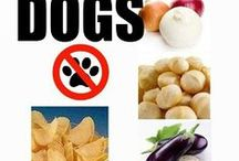 Pet Nutrition & Food Safety