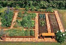 Veteményes - Növények