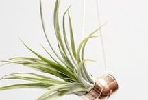 WSTR Airplant Collection / https://wesmelltherain.com/