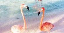 art | fauna