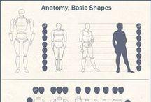 Anatomía cuerpo