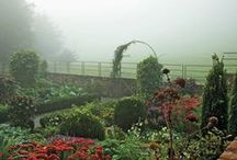 Vegetable Gardening Tips / by Carmen Johnston Gardens