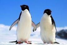 PROYECTO PINGÜINOS / Pingüinos