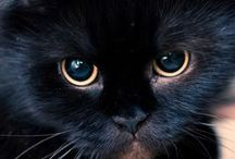 Black Cats Are Not Bad Luck / by Shirley Zuroff
