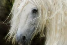 Horses, The Noble Breed / Horses are gentle, loyal and embody freedom, spirit, and adventure   / by Shirley Zuroff