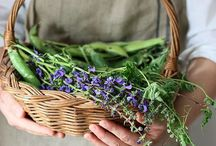 Fruits & Herbs