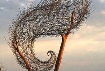 Trees / by Joanie Mansfield