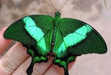 just emerald