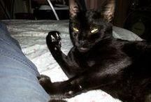 Lisa / My cat