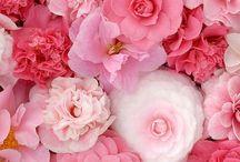Florals#Gardens / Breathtaking