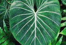 Pflanzen / Grüne Pflanzen so weit das Auge reicht - über Kakteen und Sukkulenten bis hin zu tropischen Pflanzen, lasst euch inspiereren!
