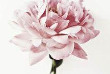 Blumige Zeiten / We love Flowers! Der Sommer ist die Zeit der Blumen: Blüten überall, von schlichtem Weiß über Pastelfarben wie Rosa oder Flieder bis hin zu knalligen bunten Farben.