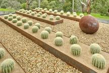 The Succulent/Dry Garden