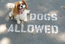Dogs about Town / SidewalkDog.com is all about you, your dog, and all things dog-friendly! Want to get in on the action? Email kiersten@sidewalkdog.com for an invitation to share pins of your pooch on our board. Welcome, welcome, welcome to Sidewalk Dog's dog-loving community.