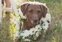 Dog Friendly Weddings / Inspiring ways to include the pups in your wedding day...