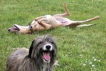 DogGone Funny / Dogs have a special way of tickling our funny-bones!  :)