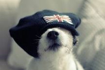 Doggie Dress-Up / Costumes, outfits, hats and dog-fashion we love...